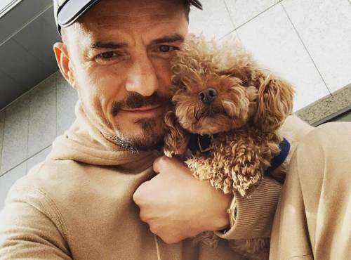 Орландо Блум набил татуировку в честь своего погибшего пса